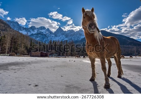 Horse in the mountains in winter - stock photo
