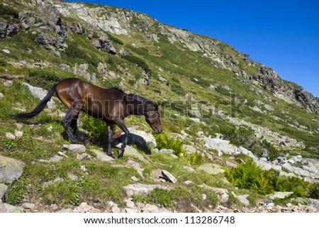 Horse in the Rila mountain - stock photo