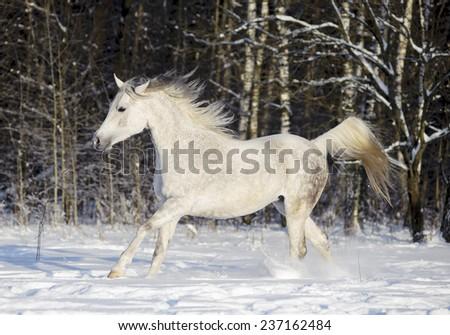 horse in winter field - stock photo