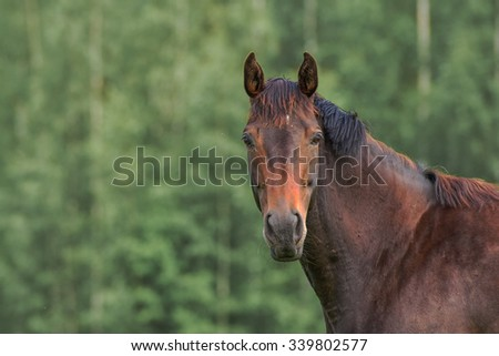 Horse is looking directly at the camera in pasture