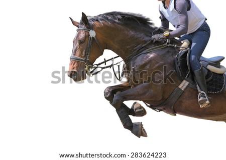 Horse jumping on white background. Isolated.