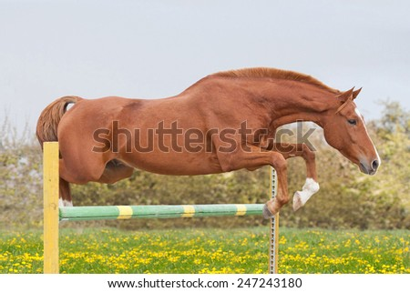 Horse jumping over obstacle - stock photo