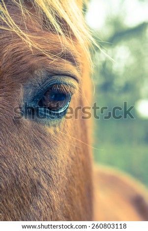 Horse left eye with shallow depth of field and cross processing - stock photo