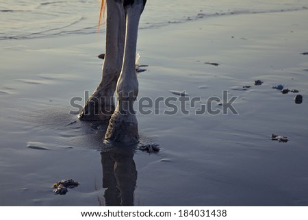 Horse legs close up at the beach - stock photo