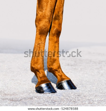 Horse legs with hooves closeup. Skin of chestnut horse. Square format.