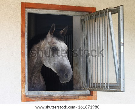 Horse looking from the box window - stock photo