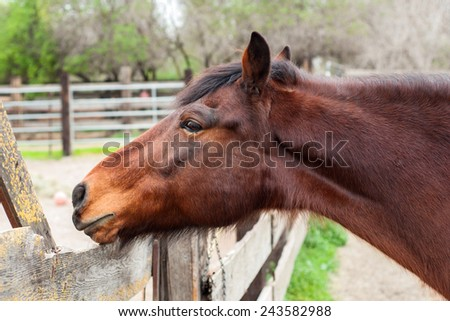 Horse looking out of Paddock - stock photo