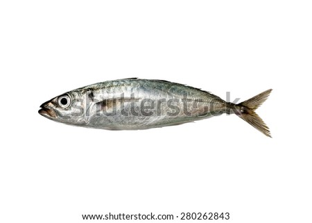 horse mackerel ,isolated on white background