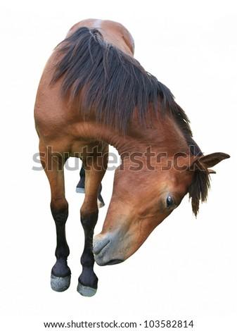 horse making faces isolated on white - stock photo