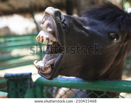 horse mouth - stock photo