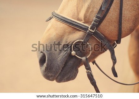 Horse nose or muzzle with bit and bridle. - stock photo