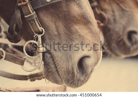 Horse nose or muzzle with bit and bridle.