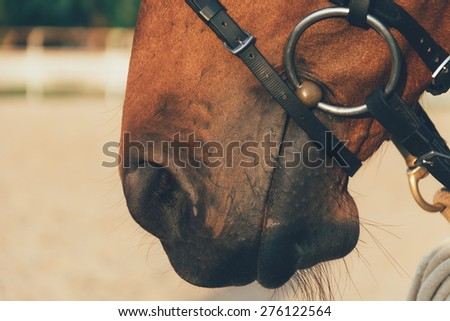 horse nose - soft focus with film filter - stock photo