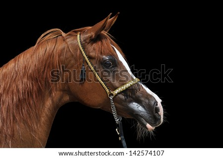 horse on a black background