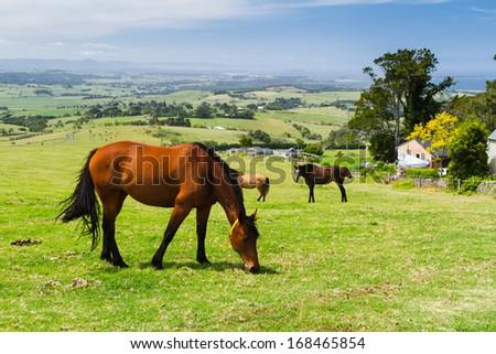 Horse on a farm, New South Wales, Australia - stock photo