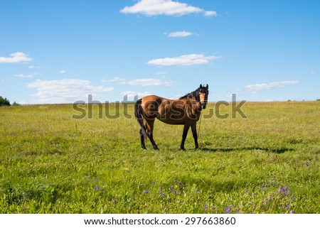 Horse on a field