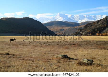 Horse on a pasture in mountains in the autumn on a background of the blue sky