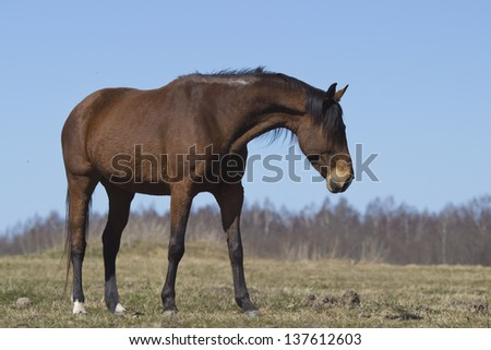 Horse on a spring pasture