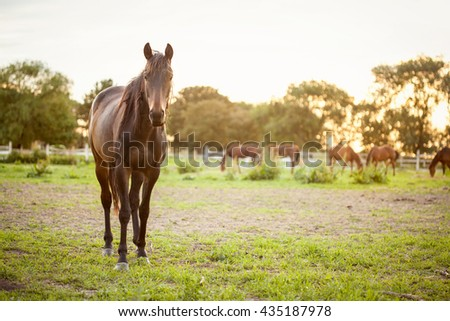 Horse on a summer pasture in sunset - stock photo