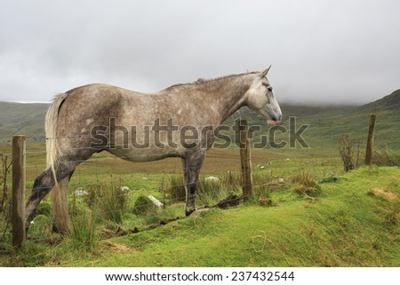 Horse on background of mountains in clouds. Connemara National Park. Republic of Ireland.