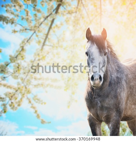 Horse on background of spring blossom nature and blue sky - stock photo