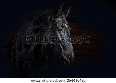 Horse on black. Studio shot - stock photo