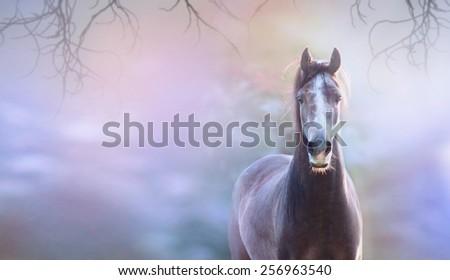 Horse on blue spring background, banner for website - stock photo