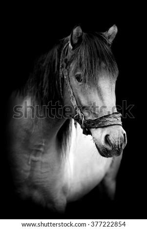 Horse on dark background. Black and white image - stock photo