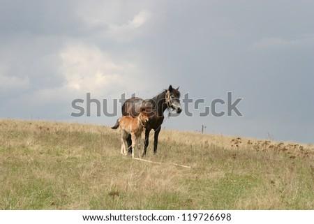 Horse on field - stock photo