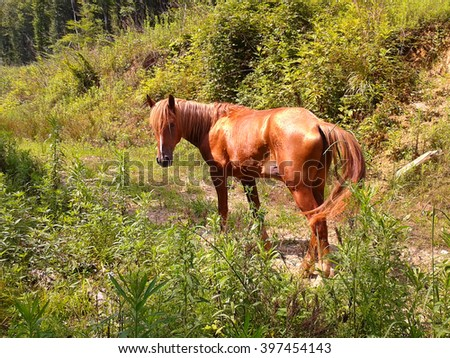 Horse on forest road, among green grass and bushes