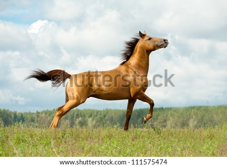 horse on freedom - stock photo