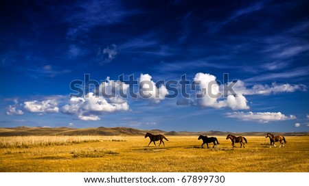 Horse on grassland - stock photo