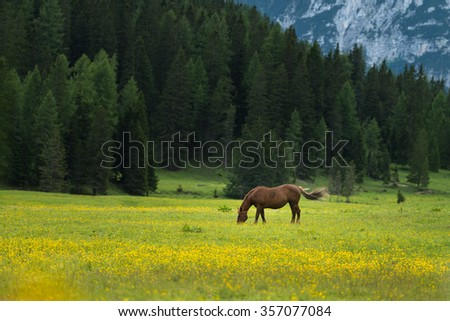 Horse on green pasture in the valley of Dolomites