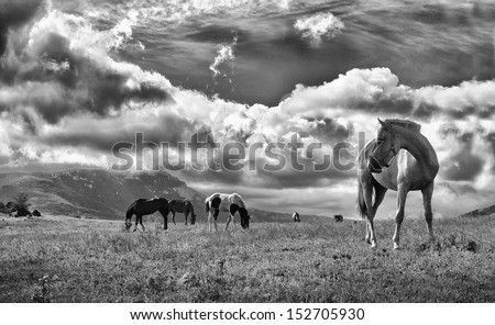 Horse on high heels.Mountains on background.Low grain added for create atmosphere
