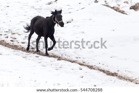 horse on nature in winter