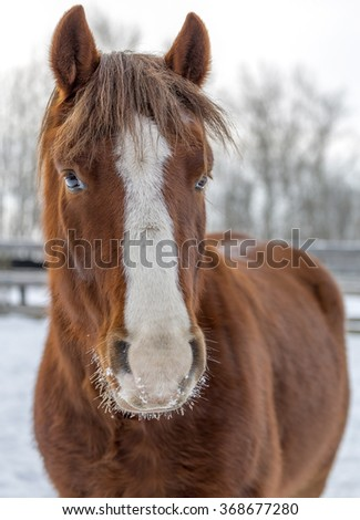 Horse on nature. Portrait of a horse, brown horse at winter time - stock photo