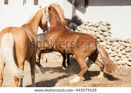 Horse on nature, portrait of a horse, brown horse. Horse fighting - stock photo