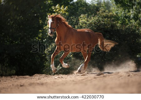 Horse on nature. Portrait of a horse, brown horse, horse galloping in paddock - stock photo
