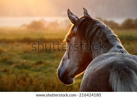 Horse on pasture at September evening near sunset. - stock photo