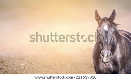 Horse on sand  background, banner for website - stock photo