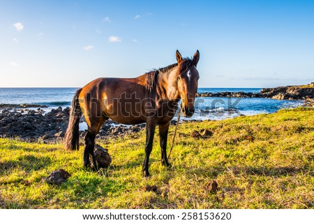 Horse on the Easter Island, Chile - stock photo