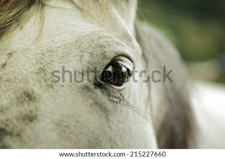 Horse on the farm, eye close up - stock photo