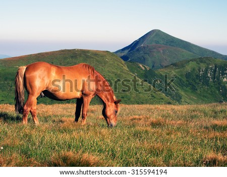 horse on the mountain pasture - stock photo