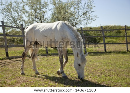horse outdoors - stock photo