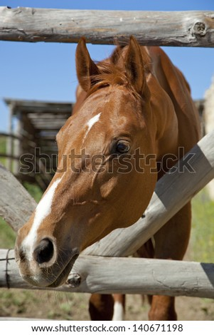 horse outdoors, close-up - stock photo