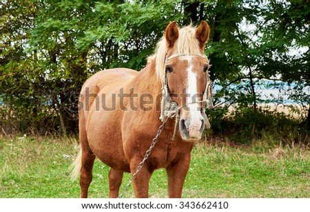 Horse over green grass and trees background - stock photo