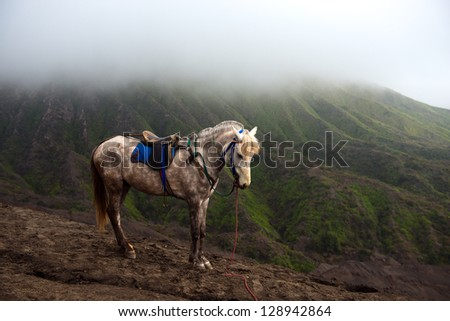 horse over mount bromo - stock photo