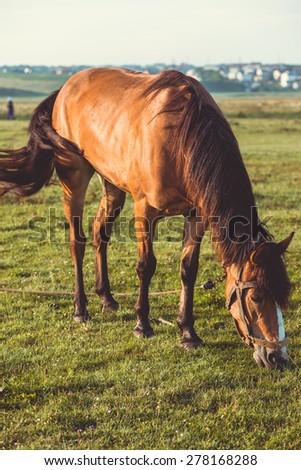 horse pasture - stock photo