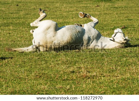 Horse playing on the grass - stock photo