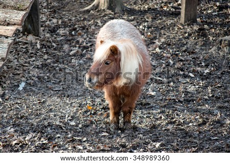 horse pony in aviary of the zoo - stock photo